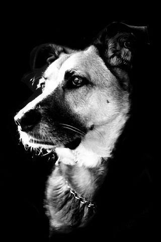 狗狗卡通图片黑白