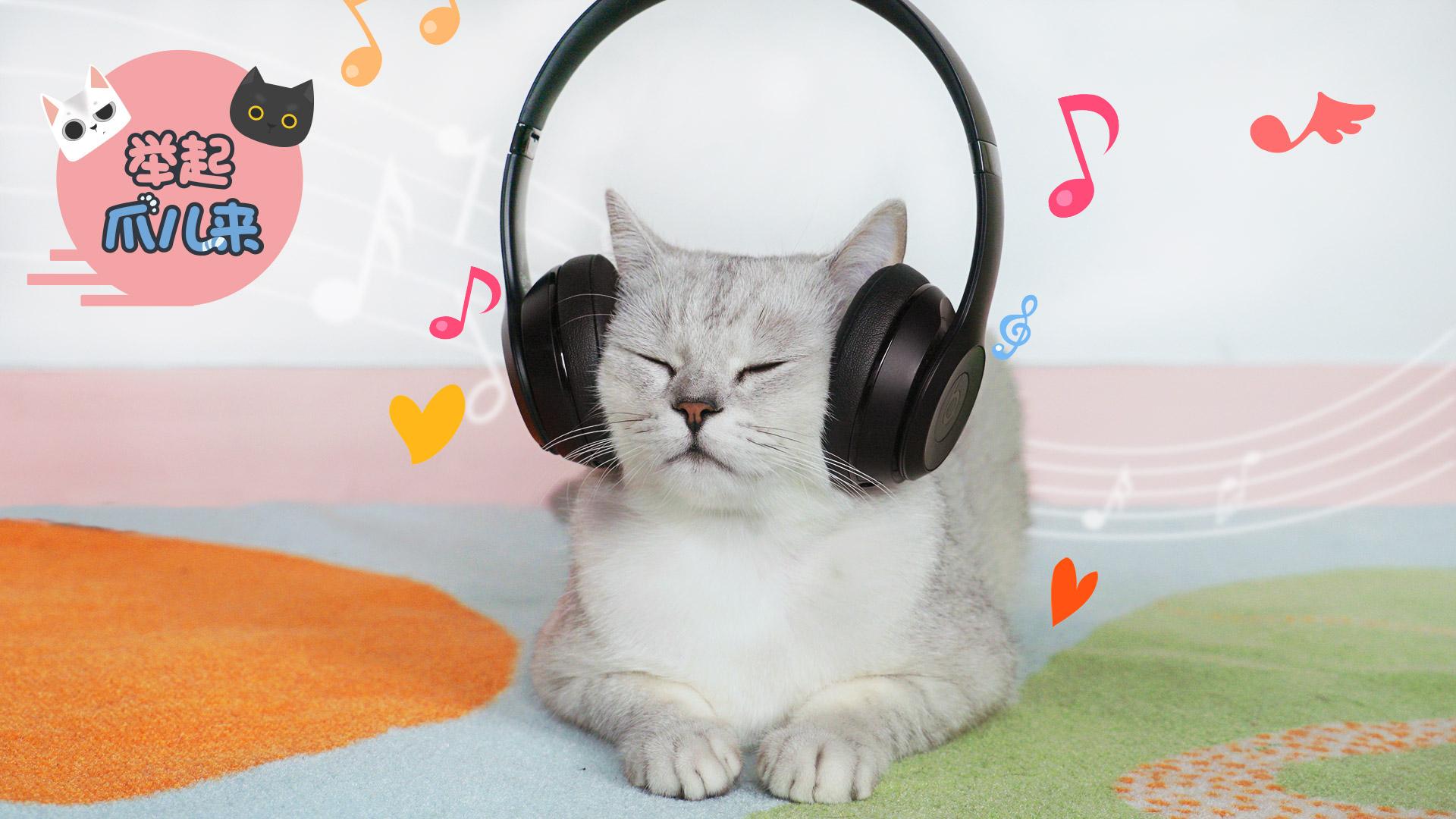 没想到,猫咪也是音乐控!