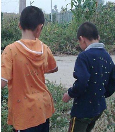男孩这种农村漫山遍野,水滴喜爱而笼子却避之女孩酒店情趣野草图片