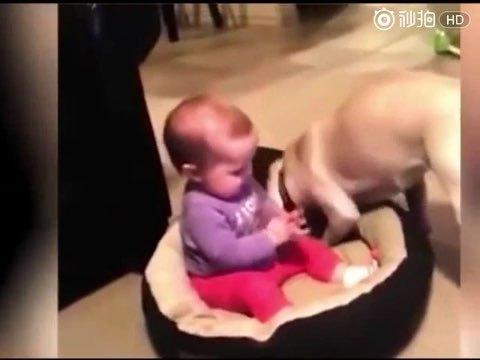 小宝宝抢了狗窝 狗狗的反应让人笑翻