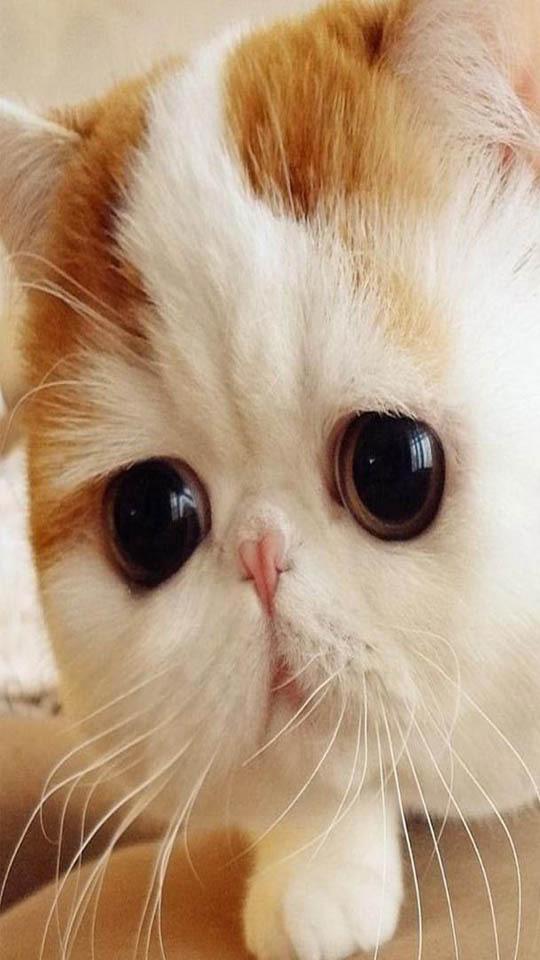 猫星人动态壁纸_360手机助手