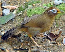 写动物叫声的词语_词语解释:(1)先天就有或后来学得有鸣歌能力的鸟;(2) 鸟的一类,叫声