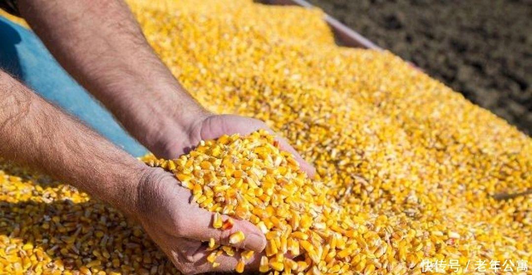 什么时间出售玉米价格好?怎样才能增加收入?来看看经验之谈吧!