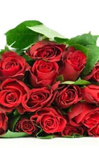 可爱的玫瑰动态壁纸_360手机助手