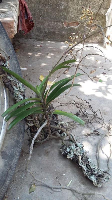 它生长在树枝上面,不要泥土,到底是什么植物,有点像兰花,但是