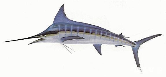 对嘴鱼剪纸图解