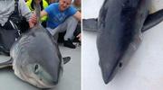 垂钓爱好者意外钓到400斤鼠鲨