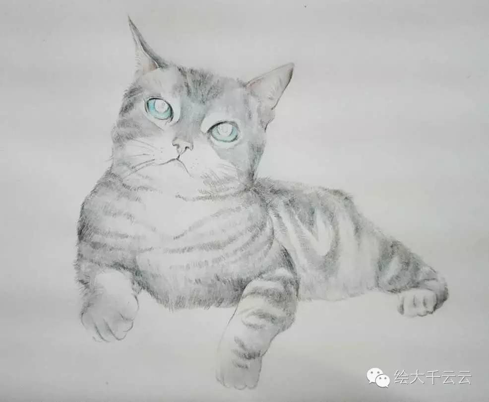 彩铅素描小猫步骤图