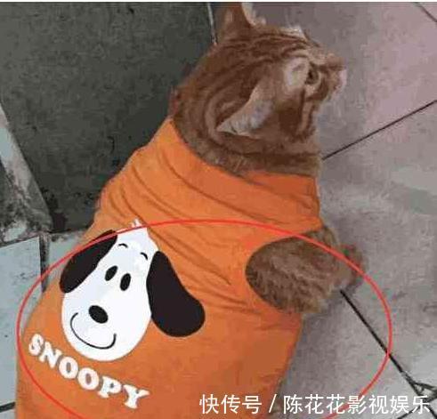 总被人说胖橘猫干脆不见人,买了新衣服来遮肉肉,可猫却更抑郁了