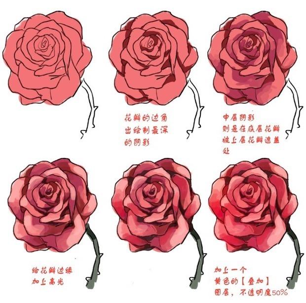首先,我们先画一个轮廓草图,即,勾勒出玫瑰花蕾的大致形态。 1。画一个简单的轮廓,用中硬铅笔(HB)。该图形必须是椭圆形,像一个竖立的鸡蛋。线条可以画轻点,很快它们将不得不抹去。 2。在花蕾的下部用直线画一茎杆。 3。绘制左边花瓣的形式,像一个大大的泪珠。画出一个突出的S曲线。 4。在相同的位置(在左侧),添加正面和背面的花蕾的花瓣线,像一个倒置的U字。 5。在后面,我们还会添加新的花瓣在花蕾顶部。在此期间,继续进一步围绕花蕾的四周来绘制。 6。加上芽尖和绿叶,将它们放置在花蕾的左侧和右侧上。
