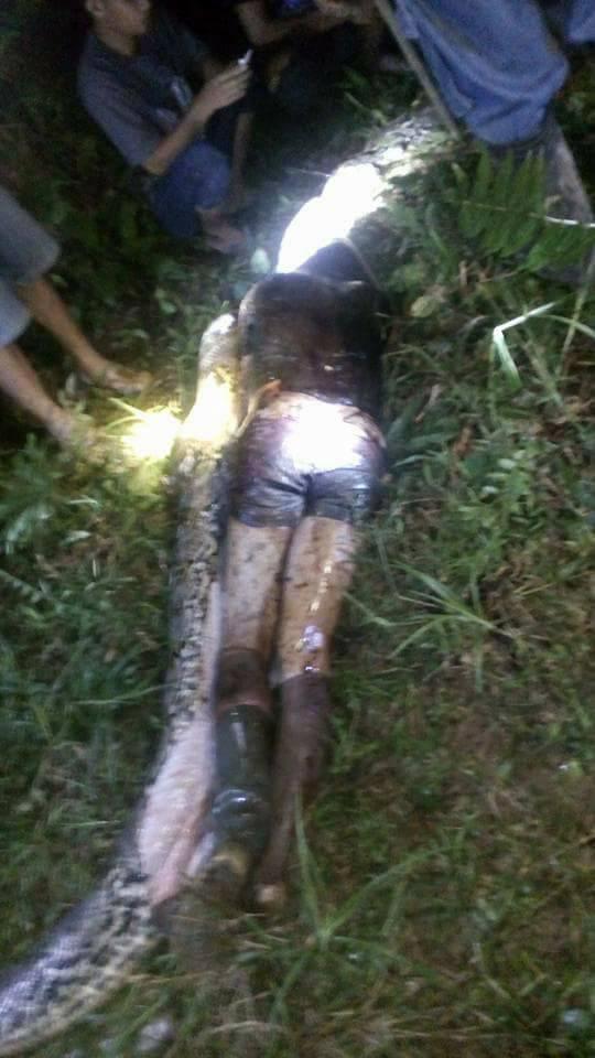 腹��_印尼巨蟒吞噬25岁男子 村民剖蛇腹寻回遗体