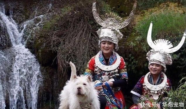 世界4大猎犬中国名犬跻身豪强其中它以屠狼闻名于世
