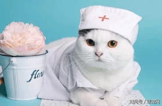 互联网宠物医疗格局未定,留给创业者的机会还有很多