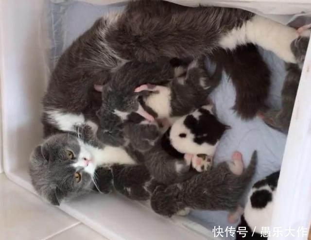 猫表情正在给小猫假装,两只仓鼠喂奶小猫喝奶妈妈包闫你了妮糟蹋图片