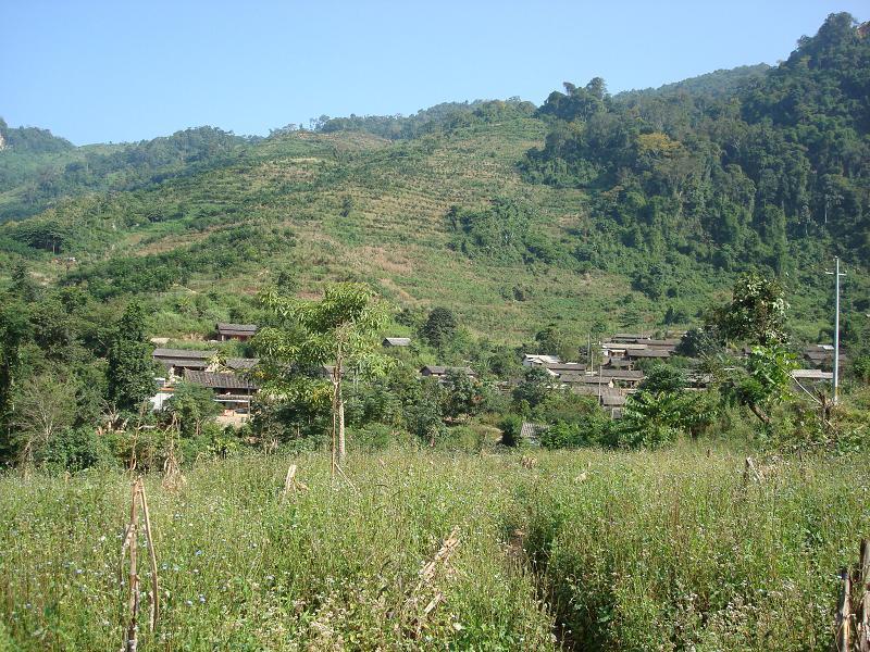 勐连农场风景