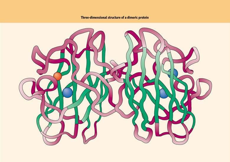 在蛋白质三级结构内的独立折叠单元.