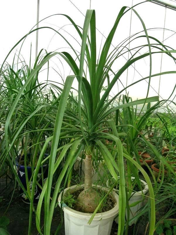 室内观叶植物