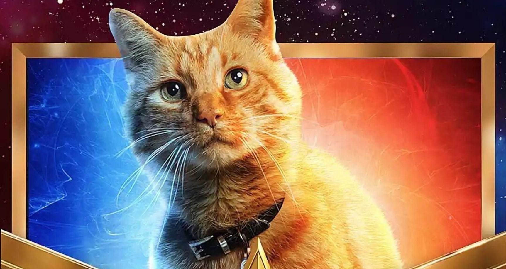 """《惊奇队长》中一爪子抓瞎了神盾局长的猫咪""""橘座""""什么来头?"""