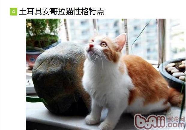 在提供两个判别公母猫的图片和文字资料给您学习,对照喵咪自行判断一
