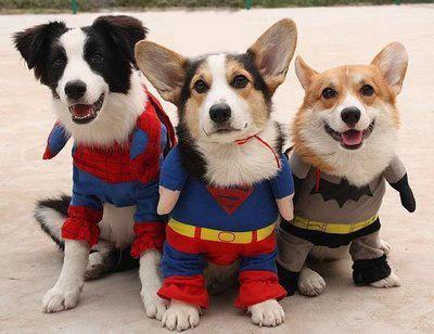 冬天狗狗会怕冷吗? 冬天狗狗应该穿衣服吗?