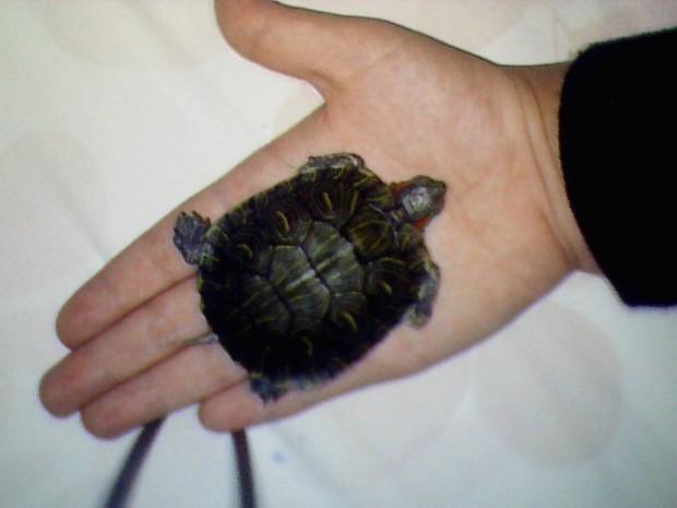 怎样判断乌龟的年龄?