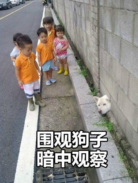 狗狗暗中观察搞笑表情包...