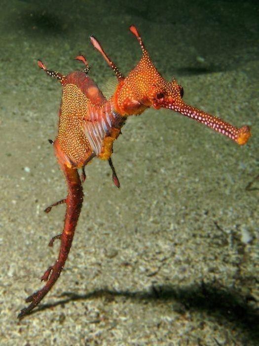 地球上唯一雌性生育的动物,令人惊讶又称奇                   【图文转载】 - 兰州李老汉 - 兰州李老汉(五级拍客)