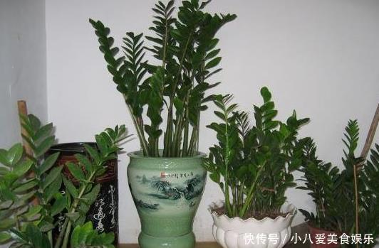 """客厅再小,这""""2种花""""也要养,吸甲醛、净化空气"""