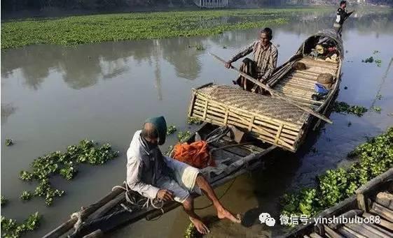 实拍:孟加拉人用水獭捕鱼,效率超高 - 后老兵 - 雲南铁道兵战友HOU老兵博客;