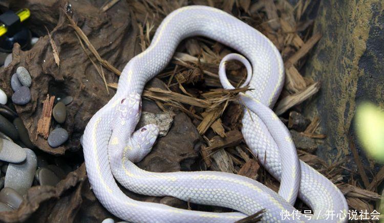 老人山上救了一只双头蛇,几天后儿子去世,孙子成为当地首富