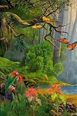热带雨林壁纸 - 新浪应用中心