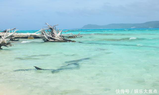 """被誉为塞班岛的""""珍珠""""蓝天白云海水清澈一定不能错过浮潜!"""