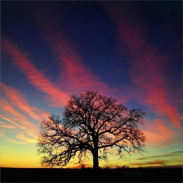 让我们逐字逐句地来把这篇关于爱情的经典诗作赏析一遍。 艺术震撼力,显得无比的厚重   《致橡树》一诗,采取木棉树的独白口吻与橡树对话,在当时的诗歌创作上,这种手法是具有开拓性的。橡树是一种木质紧实而高大的用材树,而木棉树又叫英雄树,形象亦高大挺拔,是花树中最高大的一种。我们不得不承认诗人在选取诗歌创作材料时的精心设计:橡树是那样适合代表男性的阳刚之美,而木棉则又是那样贴切地代表了女性的自强自立以及与男性的平等要求。诗人通过拟物化的艺术手法,用木棉树的内心独白,热情而坦城地歌唱自己的人格理想以及要求比