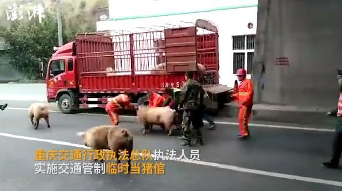【转】北京时间       货车侧翻25头肥猪闹高速 交警临时当猪倌 - 妙康居士 - 妙康居士~晴樵雪读的博客