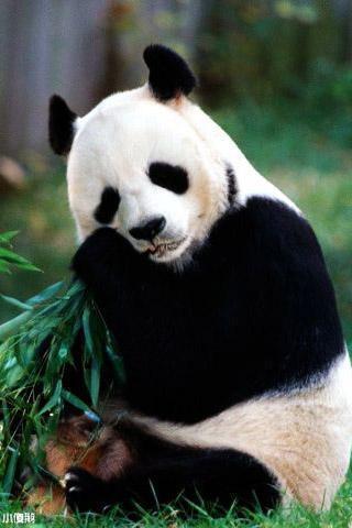 熊猫壁纸_360手机助手