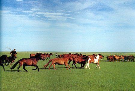 骑马树林风景图