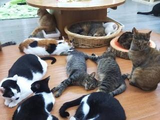 为什么有的铲屎官养一只猫后,又养了第二只猫?三位猫奴说了实话